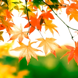 fall-leaves-tree-2